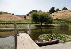 pet friendly vacation rental in napa valley
