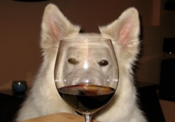 dog friendly wine tours